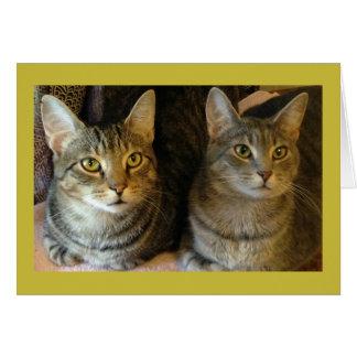 Tabby Cat Happy Birthday Card From Both of Us