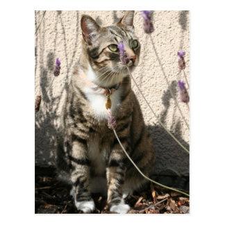 Tabby Cat in a Lavendor Bush Postcard