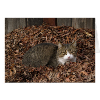 Tabby Cat in Autumn Leaves Retirement Card