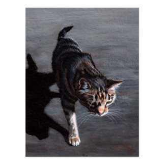 Tabby Cat in Sun with Shadow Postcard