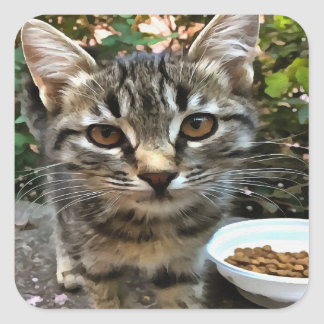Tabby Cat Kitten Making Eye Contact Square Sticker