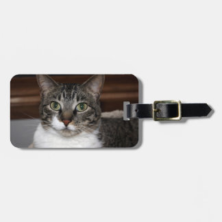 Tabby Cat Looking at You Luggage Tag