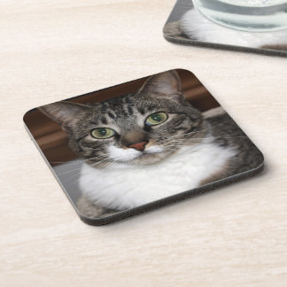 Tabby Cat Looking at You Photo Coaster