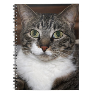 Tabby Cat Looking at You Photo Notebook