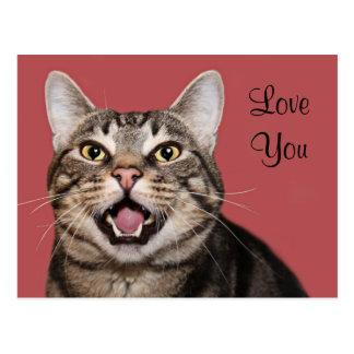 Tabby cat love postcard