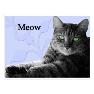 Tabby Cat Meow Postcard