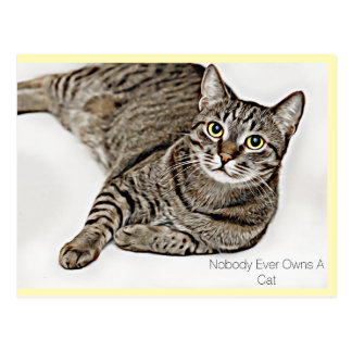 """Tabby Cat """"Nobody Ever Owns A Cat"""" 