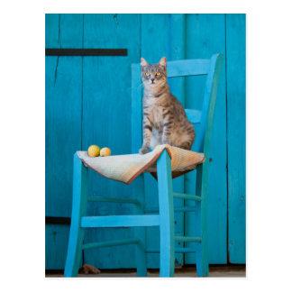 Tabby cat on a blue chair postcard