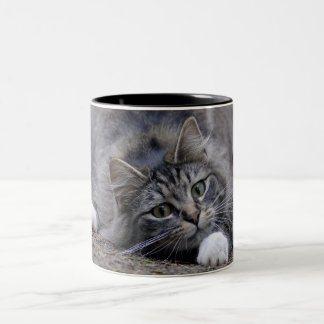 Tabby Cat on Alert Ready to Pounce Two-Tone Coffee Mug