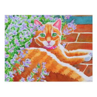 Tabby Cat on Garden Path Postcard