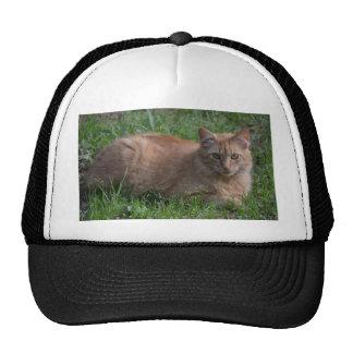Tabby cat orange cap