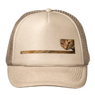 Tabby Cat Peeking from the Top Right Corner Cap