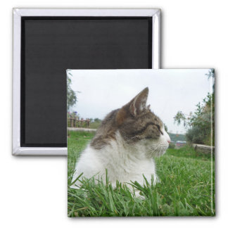 Tabby Cat Relaxing in the Grass Square Magnet