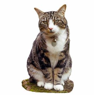 Tabby Cat Sculpture Standing Photo Sculpture