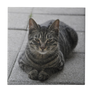 Tabby Cat Small Square Tile