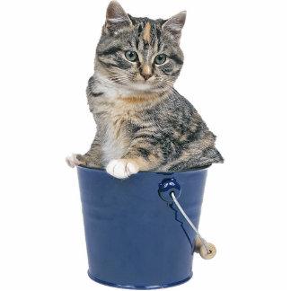 Tabby Cat Standing Photo Sculpture