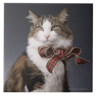 Tabby cat wearing plaid bow ceramic tile