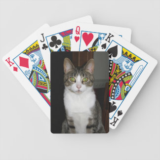 Tabby cat with big green eyes bicycle playing cards