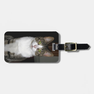 Tabby cat with big green eyes luggage tag