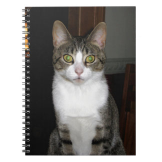 Tabby cat with big green eyes notebook