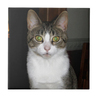 Tabby cat with big green eyes tile