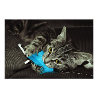 Tabby Cat With Feather Photo