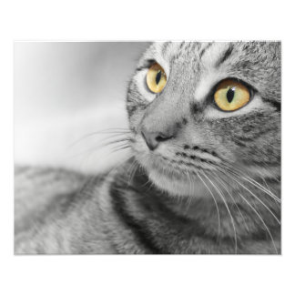 TABBY CAT WITH GOLD EYES IN BLACK AND WHITE PHOTOGRAPH