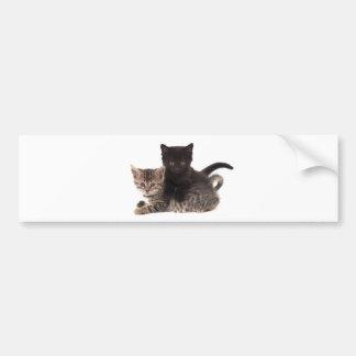 tabby kitten black kitten bumper stickers