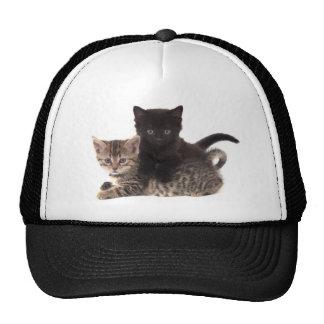 tabby kitten black kitten cap