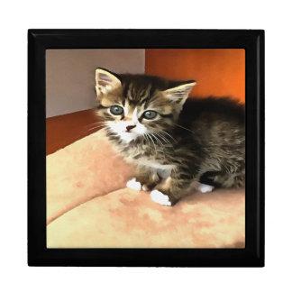 Tabby Kitten Named Miss Pip Squeak Large Square Gift Box