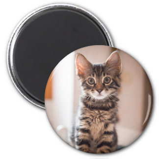 Tabby Kitten on the Table Magnet
