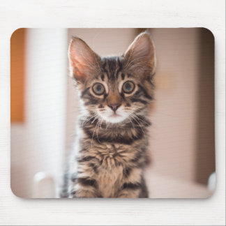 Tabby Kitten on the Table Mouse Pad
