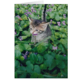 Tabby Kitten With Violet Smile Card