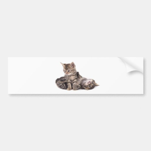 tabby kittens playing bumper sticker