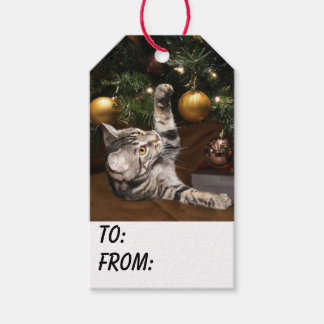 Tabby kitty cat Christmas Gift Tags