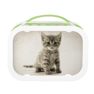 Tabby Kitty Lunch Box