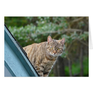Tabby on Roof Card