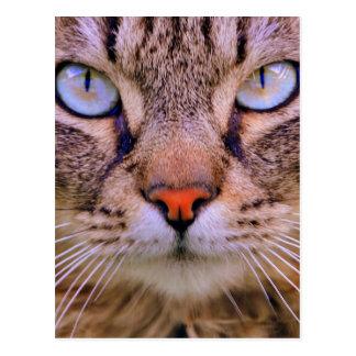 tabby photo cat postcard