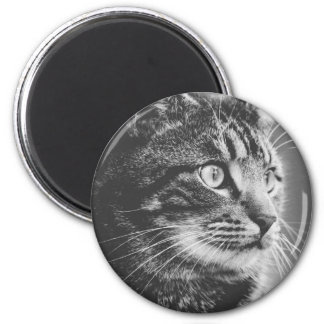 Tabby Profile | Big Eyes | Black and White Magnet