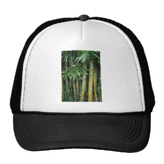 Tags on tree's cap