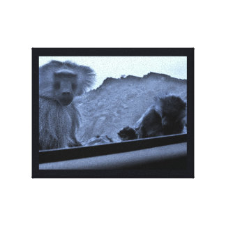 Taif Monkeys Canvas Print