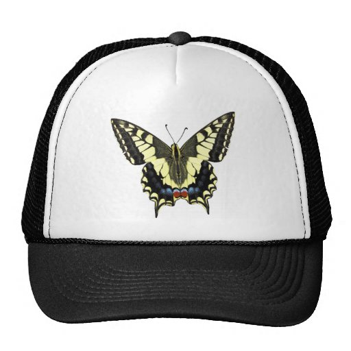 Tail-of-Swallow butterfly Hat