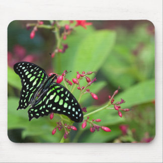 Tailed Jay butterfly Mouse Pads