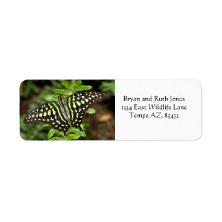 Tailed Jay butterfly Return Address Label