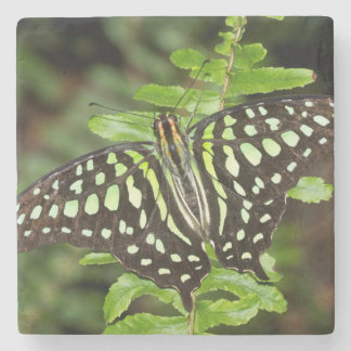 Tailed Jay butterfly Stone Coaster