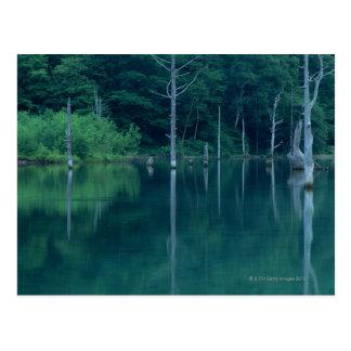 Taisho Pond Postcard
