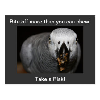 Take a Risk! African Grey Parrot Postcard