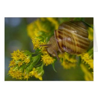 Take it easy (Snail on Yellow flowers macro) Card