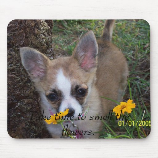 Take time to smell the flowers. mouse pad