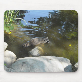 Taking a Dip - Raccoon Mouse Pad